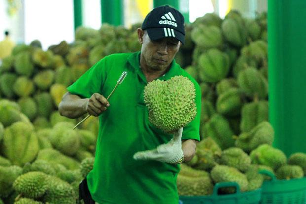 四月出口強勁 榴槤銷中國成長700%